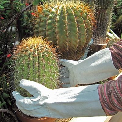 トゲから守る手袋 2双セット